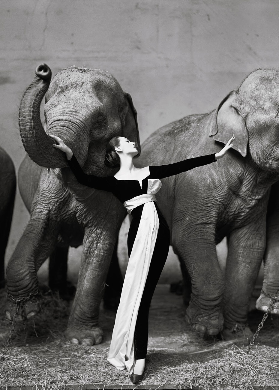 Dovima-with-elephants-Evening-dress-by-Dior-Cirque-dHiver-Paris-August-1955