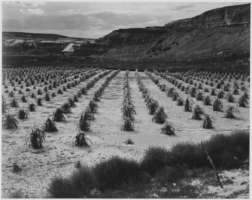 ansel-adams-national-archives